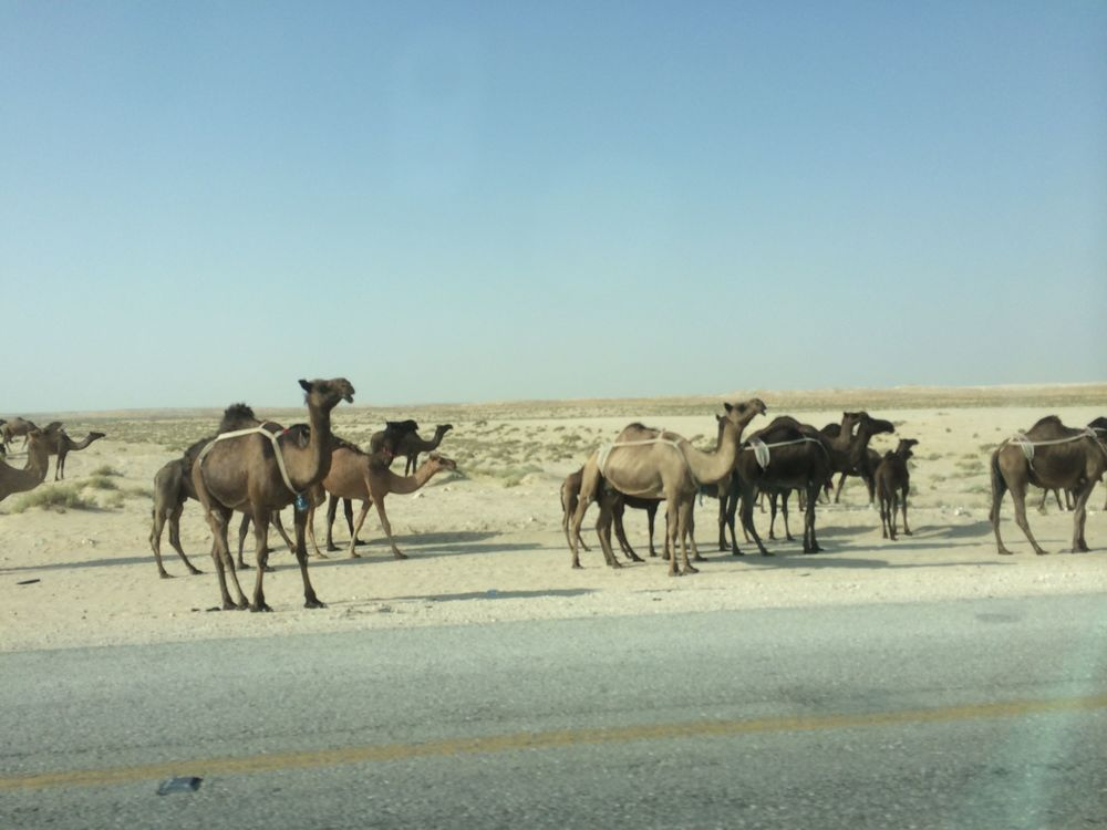 Well, it's not that there is nothing on the road. There are camels.