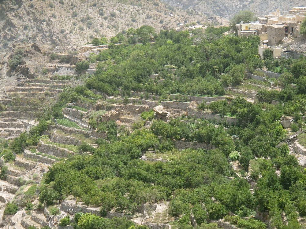 Terraced farmland in the Hajar Mountains at Jebel Akhdar