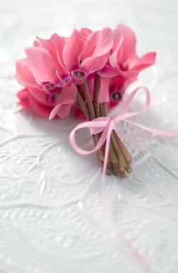cyclamen bouquet