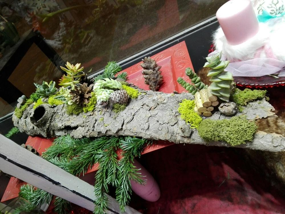 corteccia e composizione di Succulente