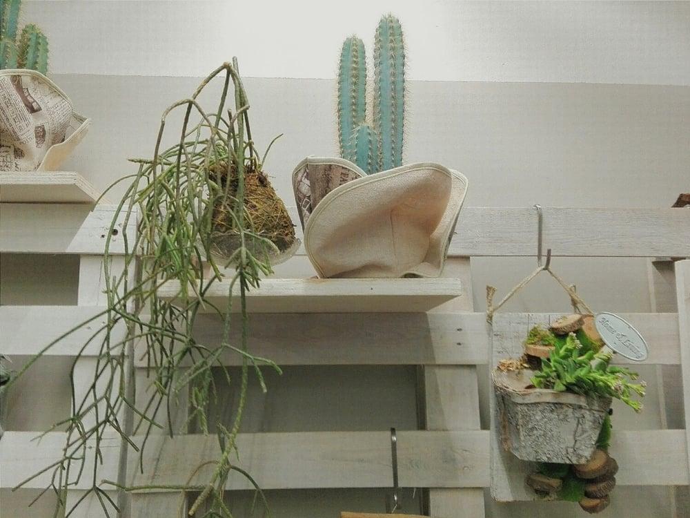 Kokedama Rhipsalis & cactus texano