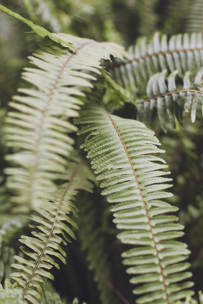 style-shooting-rocchettanervina-tizianagallofotografa-organico-botanico-11.jpg