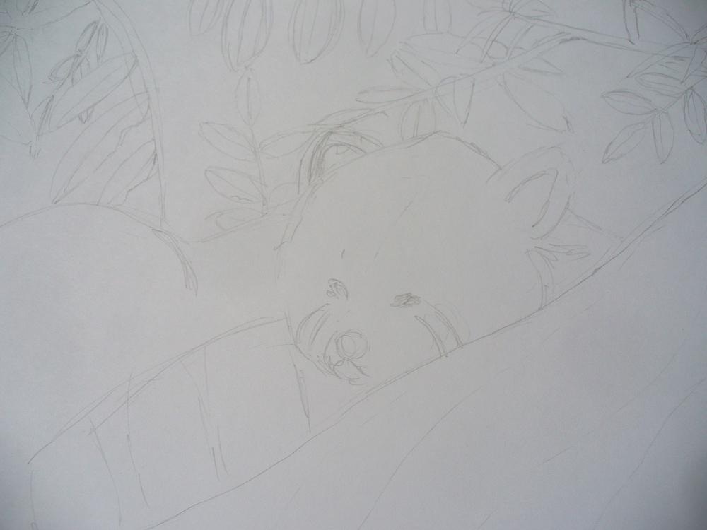 red panda sneezerville