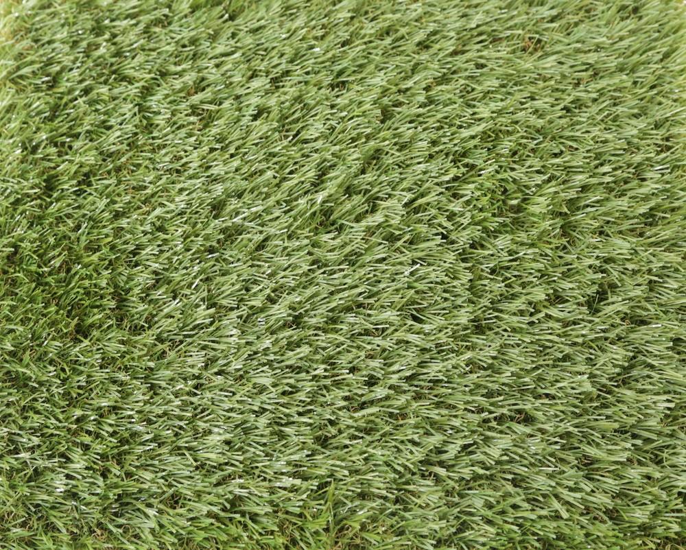 3.3 Meadow.jpg