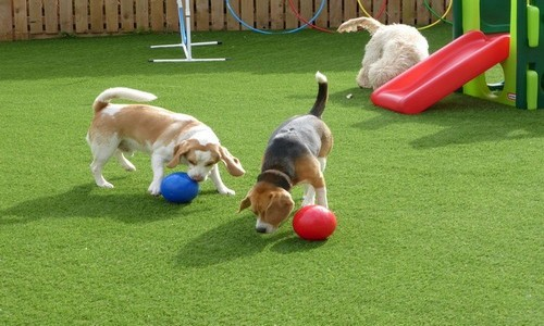 Artificial grass for pets.jpg
