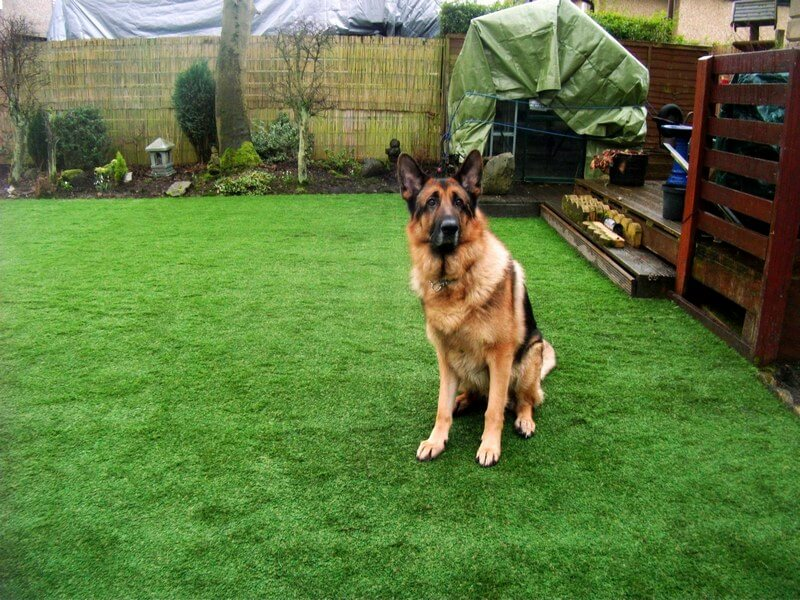 artificial-turf-dogs.jpg