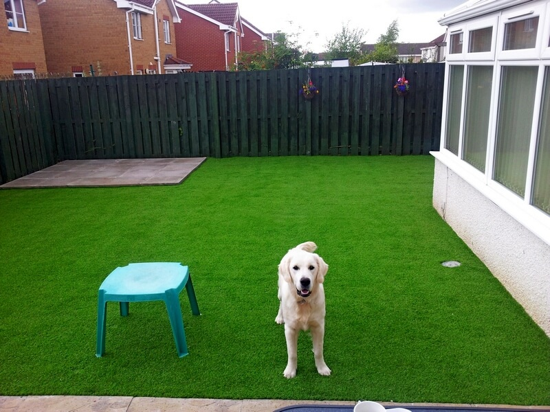 artificial-turf-pets.jpg