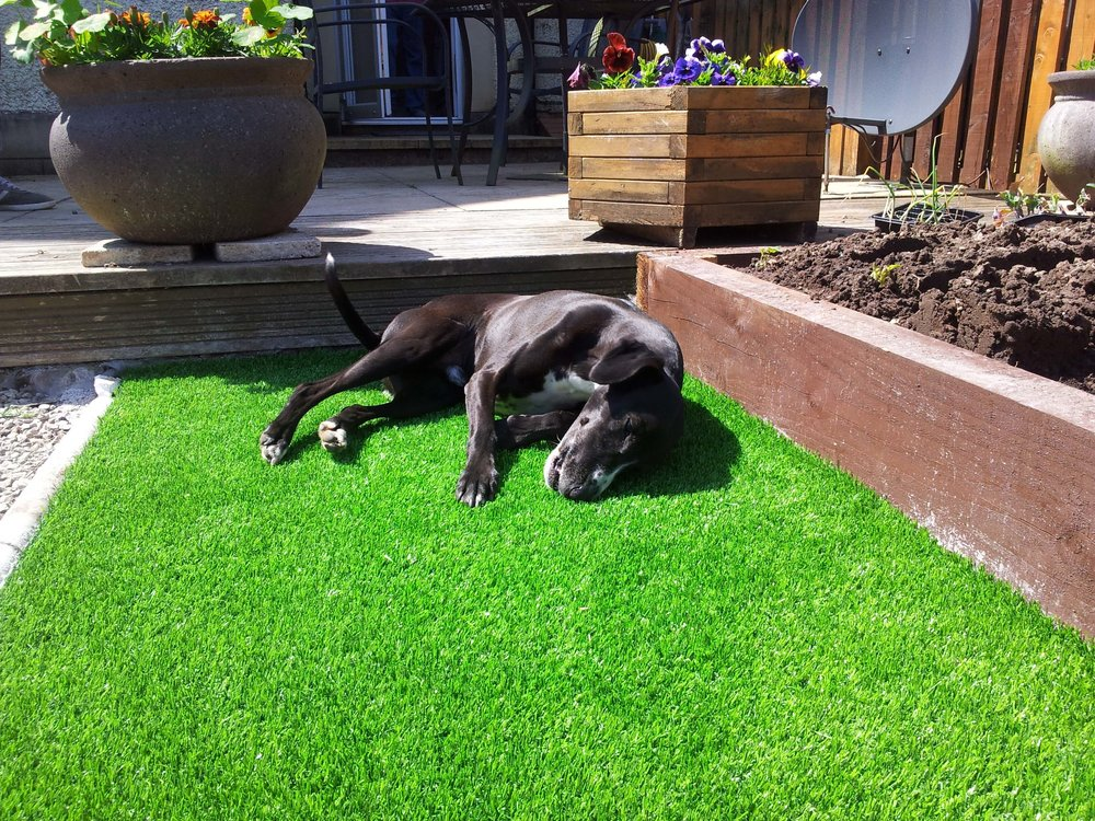 dogs-artifical-turf.jpg