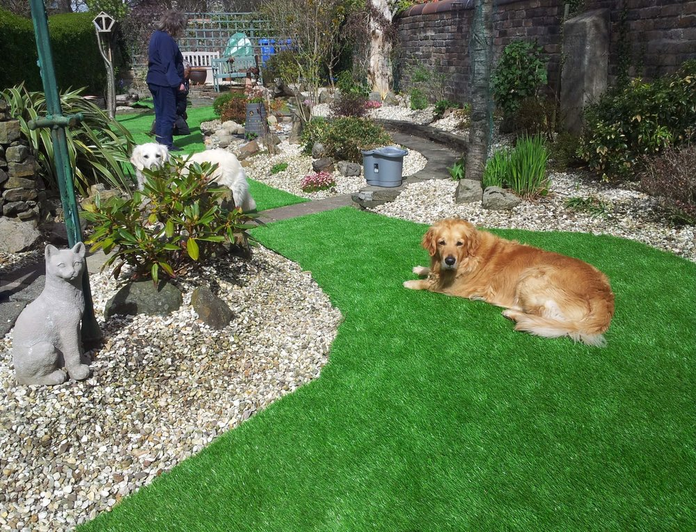 pets-artificial-turf.jpg