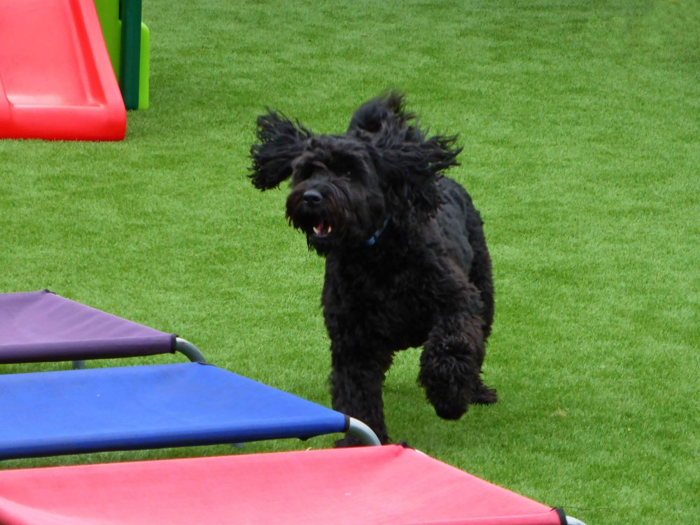 pets artificial grass.jpg