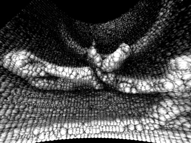 p51_scan.jpg