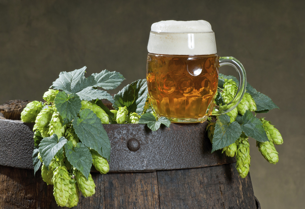 Hops makes beer taste great!
