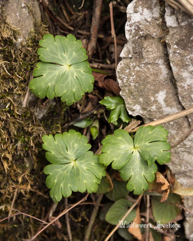 2014-03-31 Vegetation1.jpg