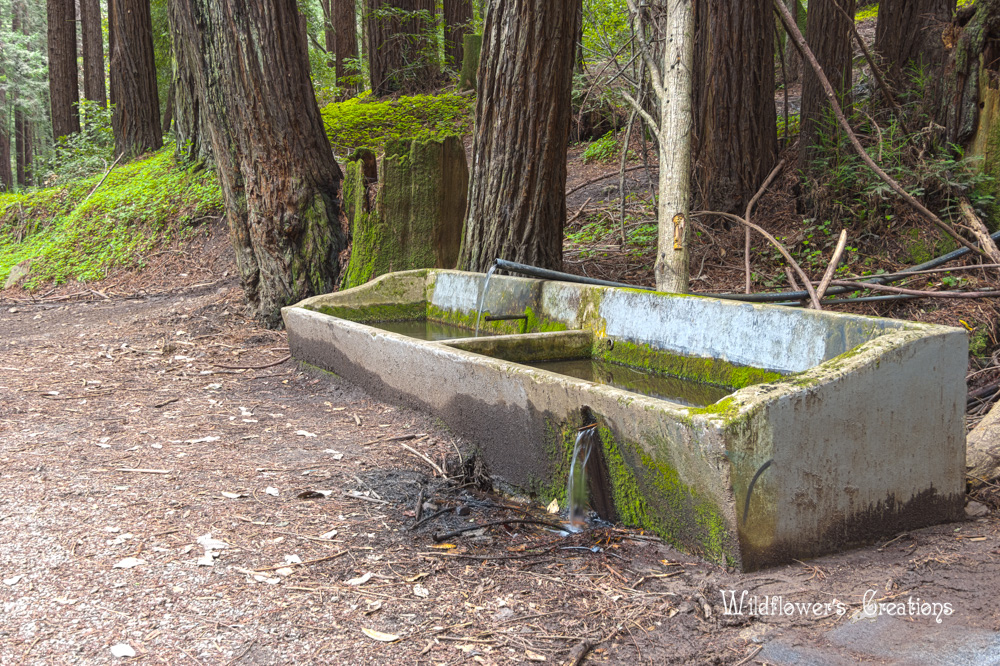 Hwy9_Henry-Cowell_Trough_2018-04-10_HDR2-shop.jpg
