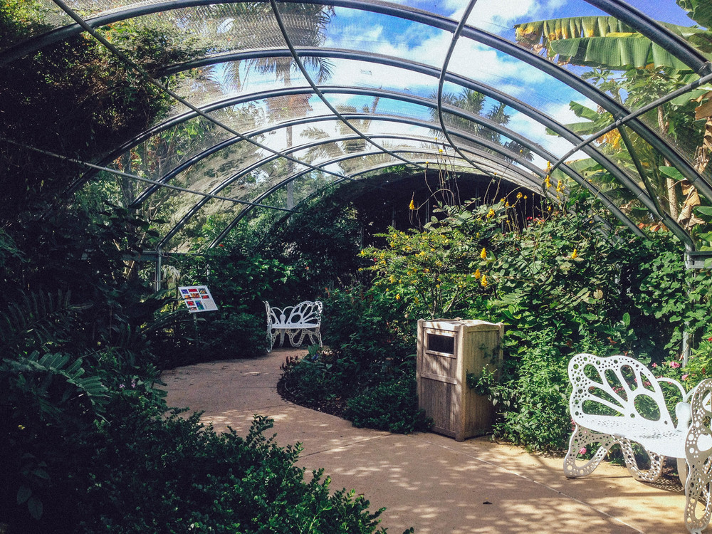 Pfeffer-Beach Butterfly House