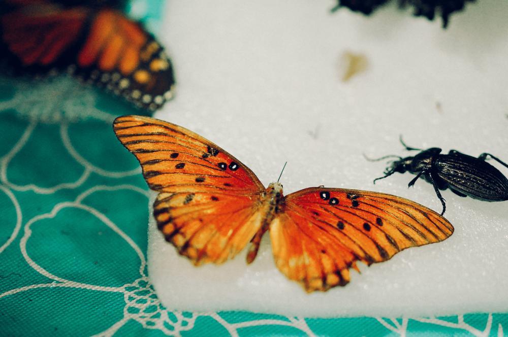 Studio detail – Butterflies!