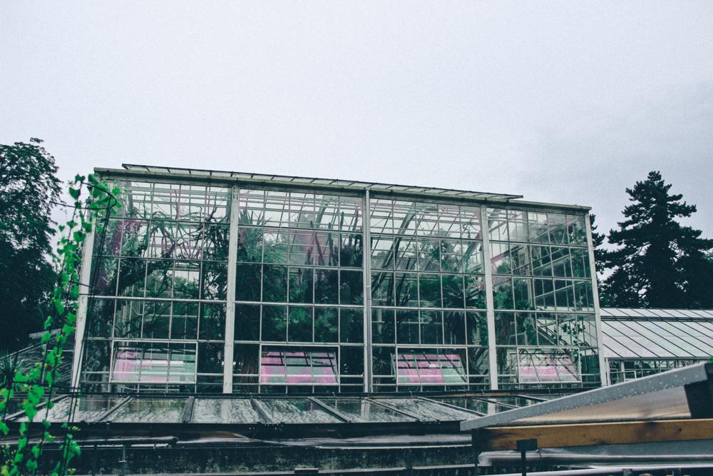 Explore u2014 Bloom ~ 15105120_Sukkulenten Sammlung Zürich Parkplatz