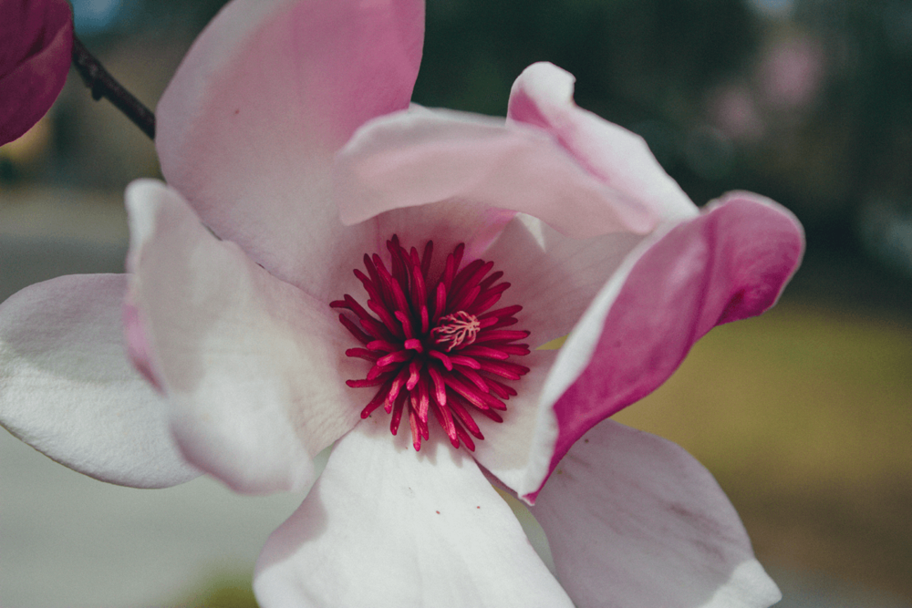 An open bloom post-pop