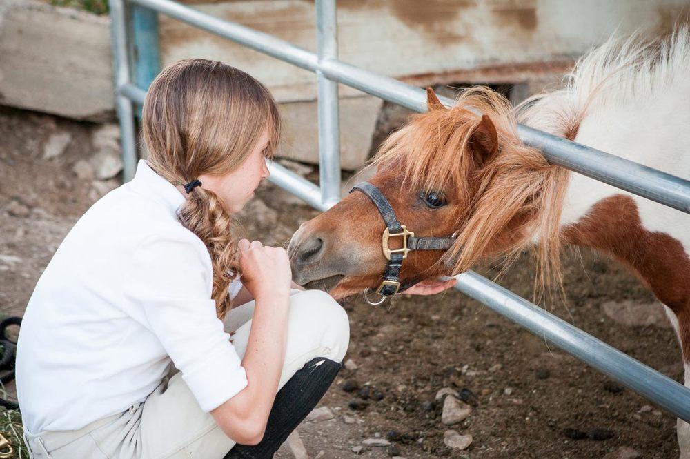 Valley view equestrian mascot, Cinnamini!