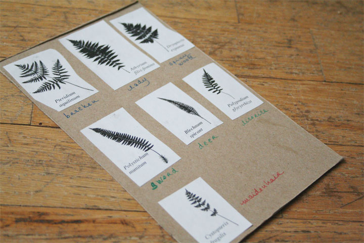 Here's a card I made to learn the shapes of the different fern leaves. The images are photocopied from  Plants of Coastal British Columbia .