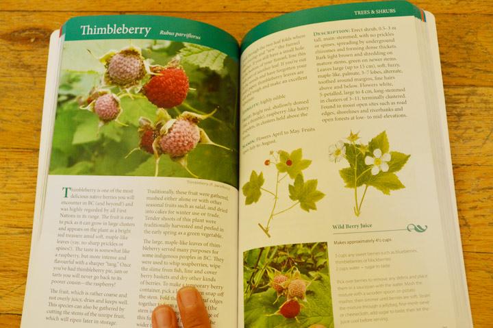 "My first ""taste"" of thimbleberries was a tasty description in  Wild Berries of British Columbia  by Fiona Hamersley Chambers."