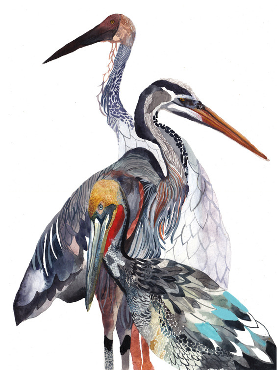 Crane, Heron, and Pelican