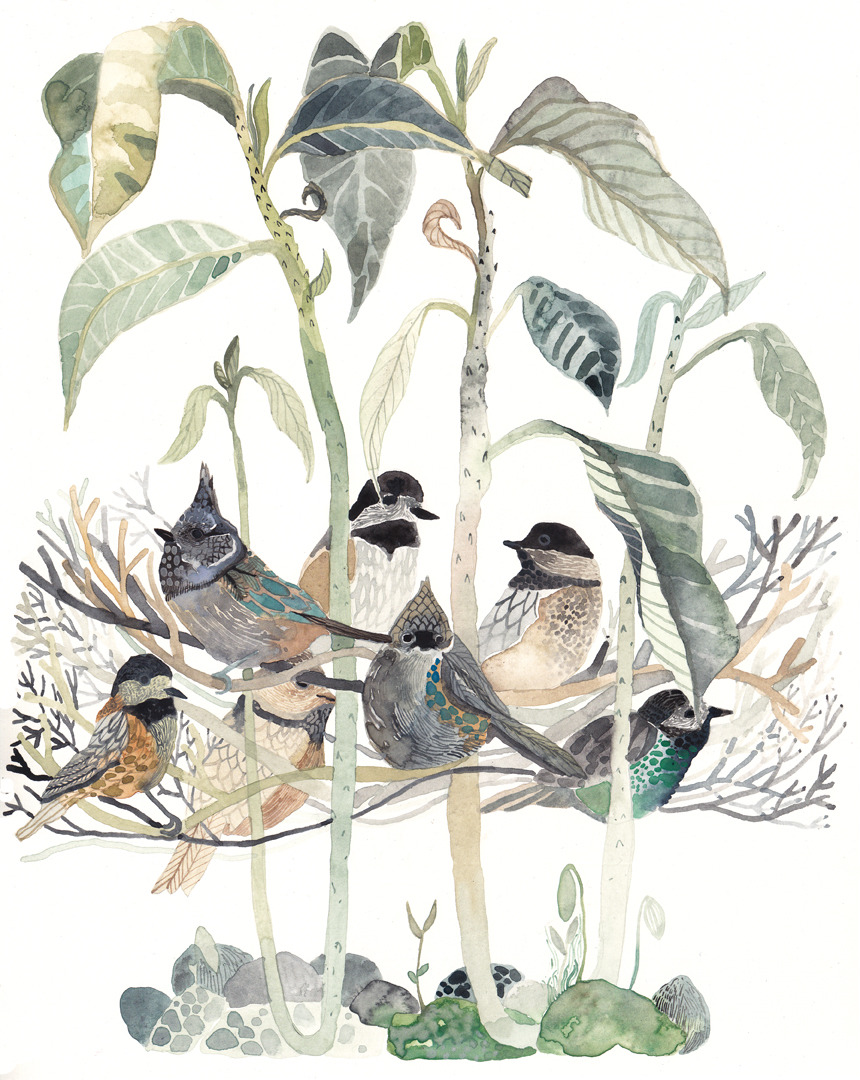 Chickadees in Avocado Tree