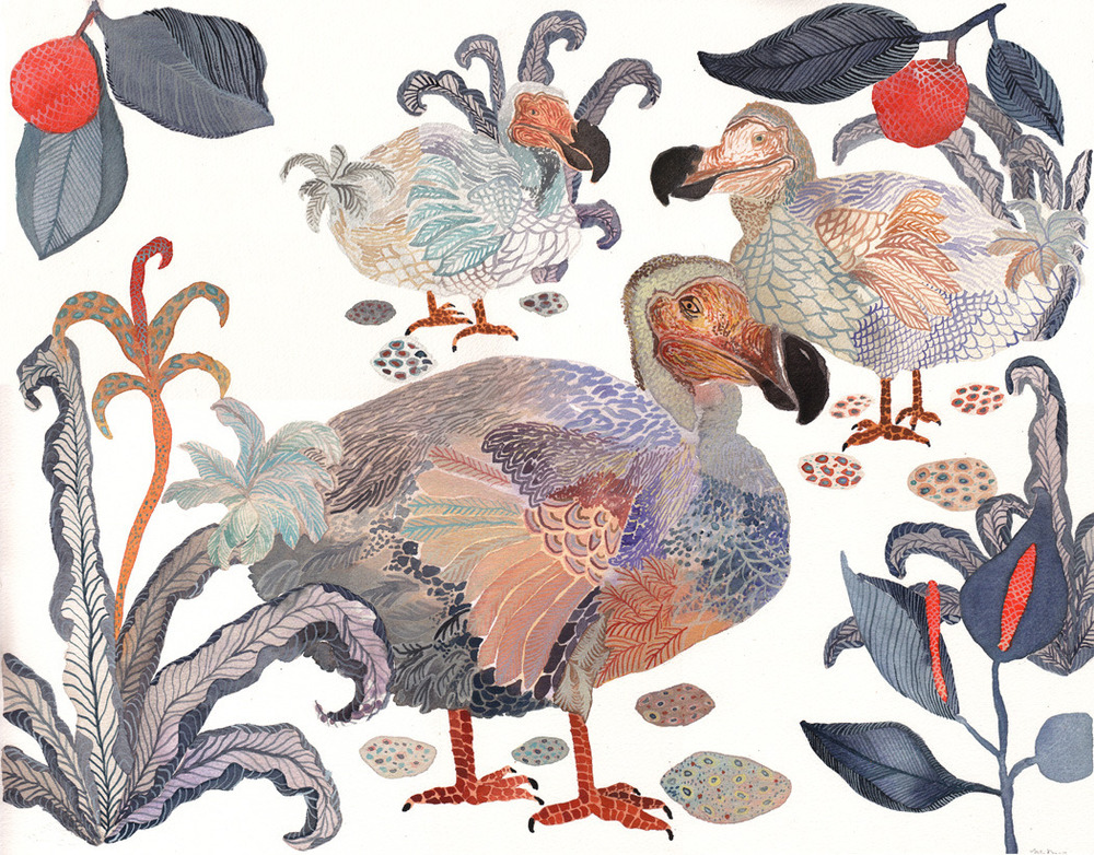Dodos Nesting