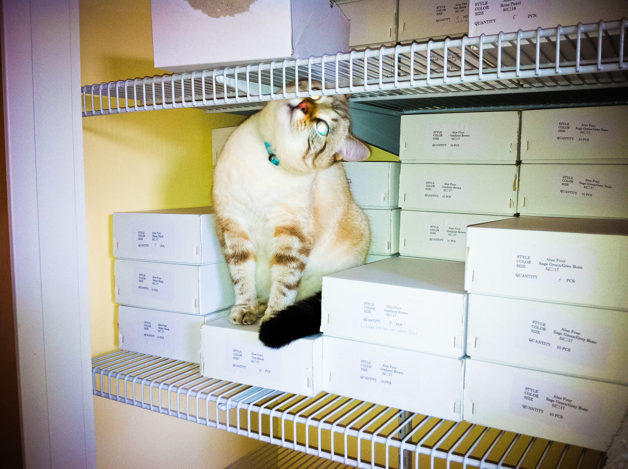 Leo the cat in the alue optics warehouse