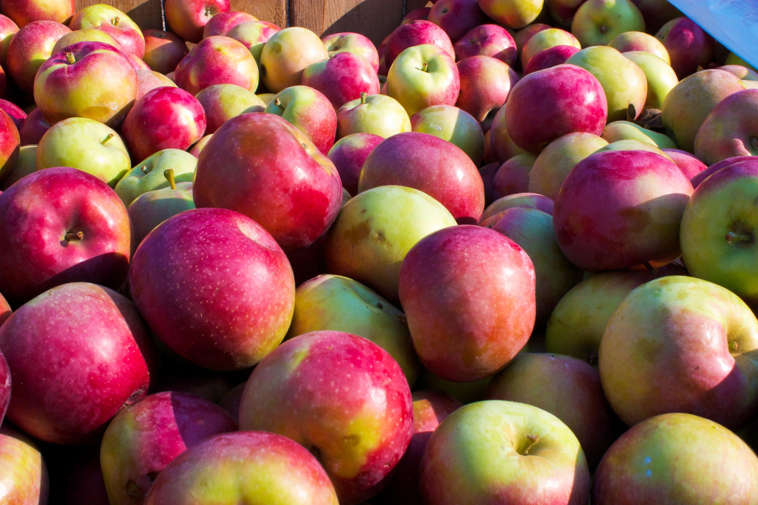 alue optics apples at clydes