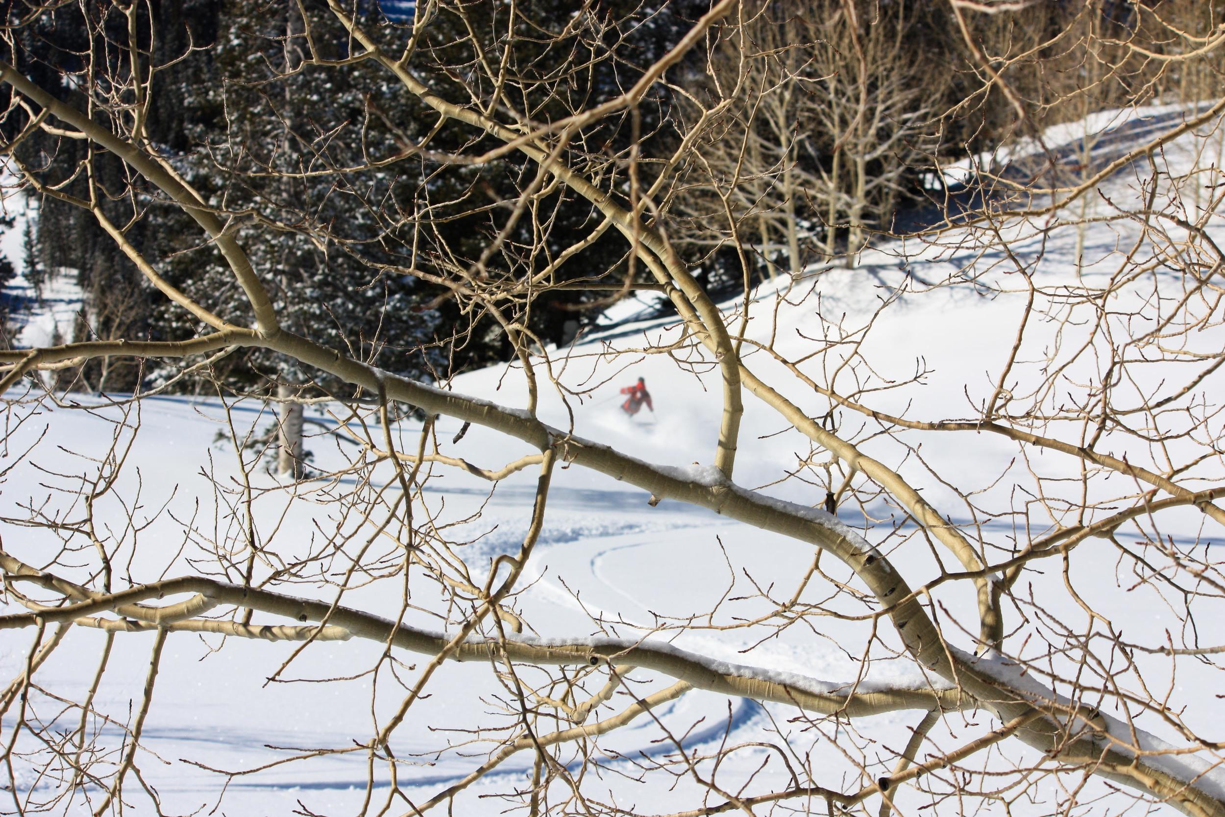 rooner tree shot