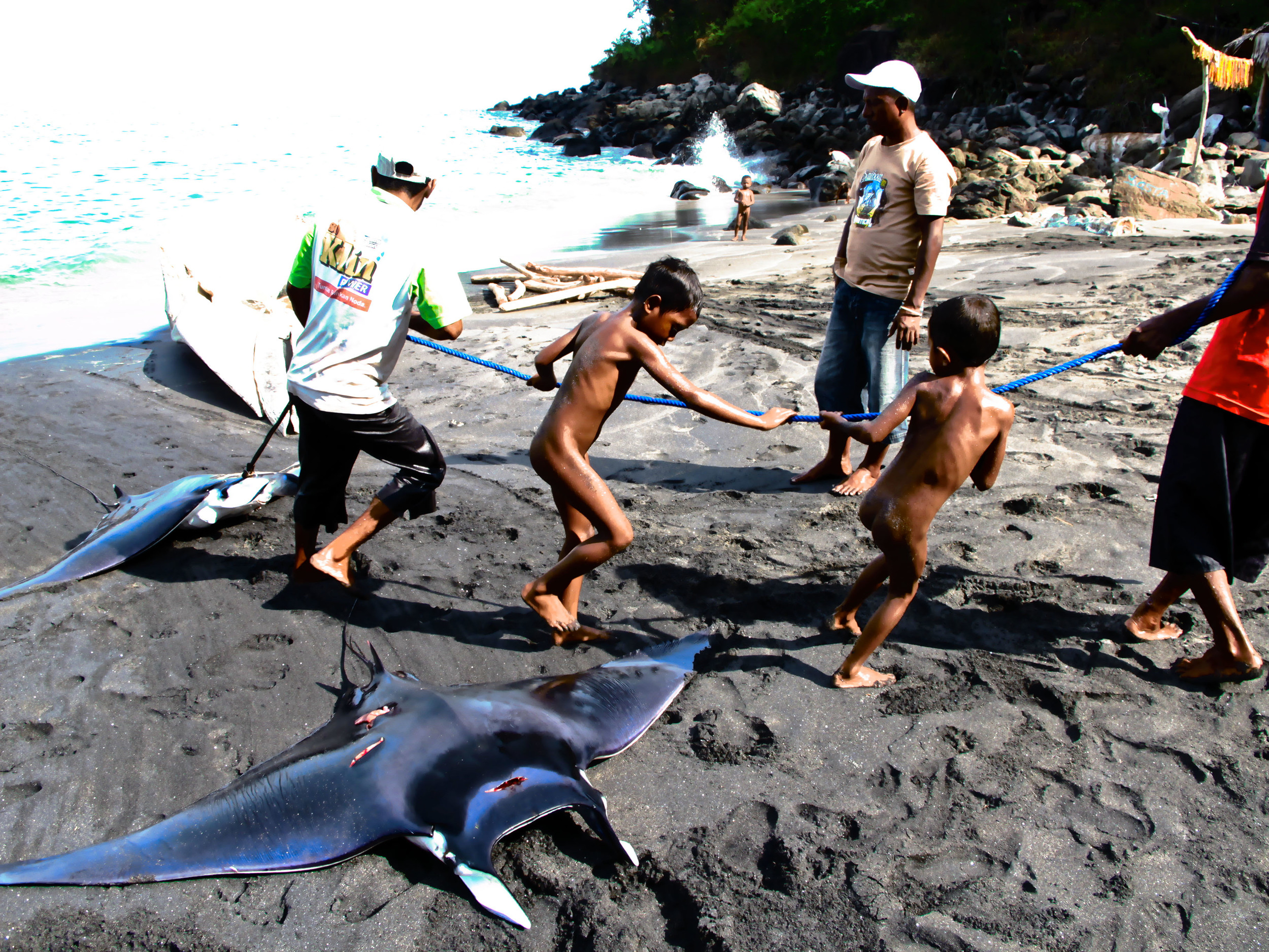 lamalera whale hunt village indonesia