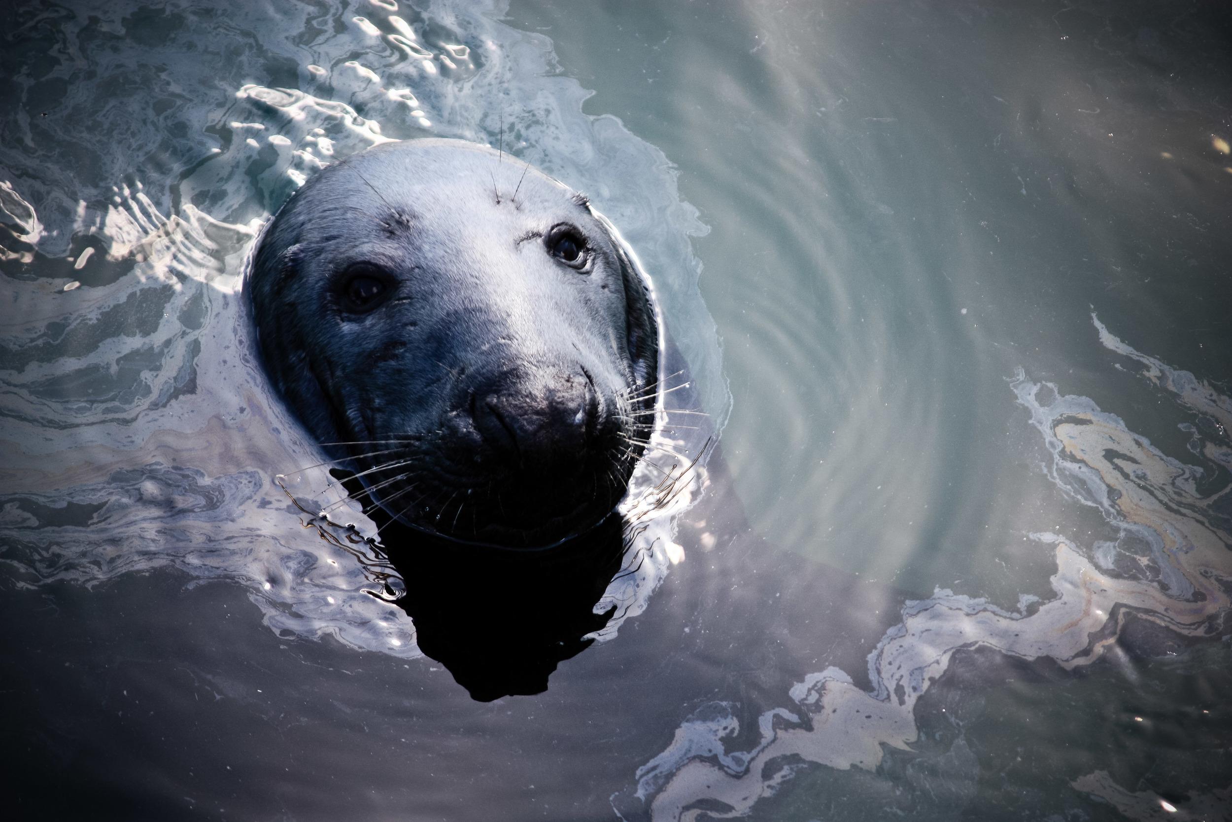 alue optics seal howth ireland