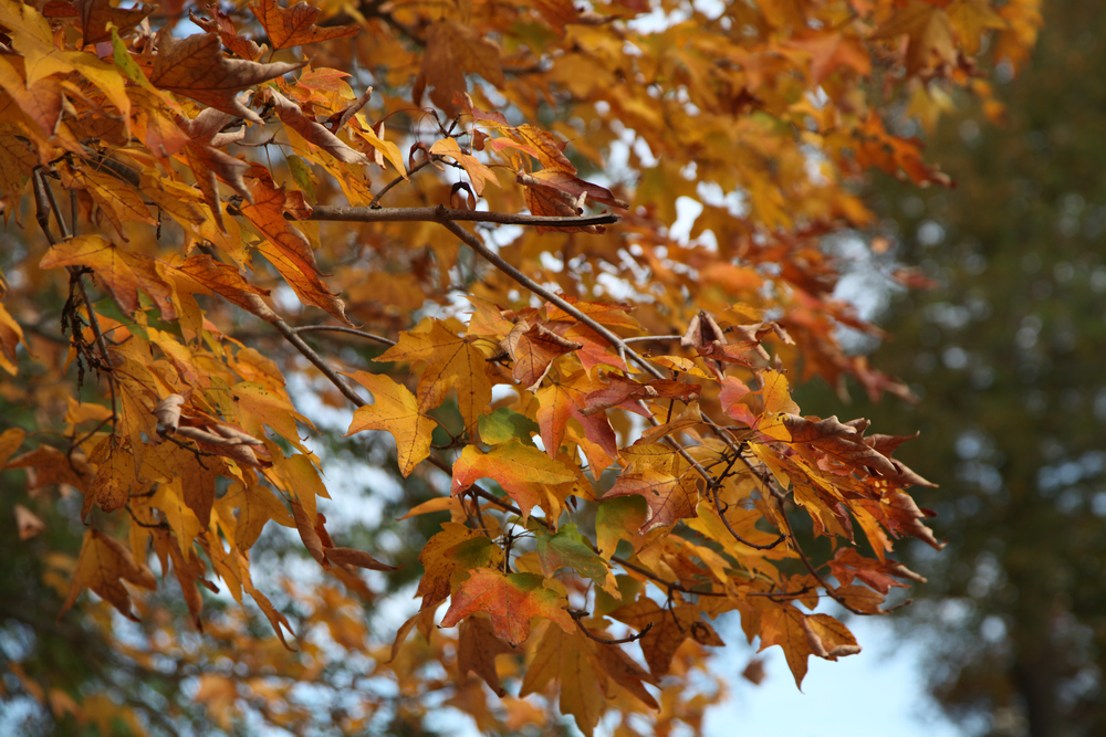 Fall..