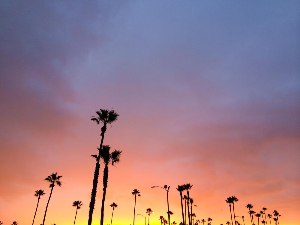 More palms!