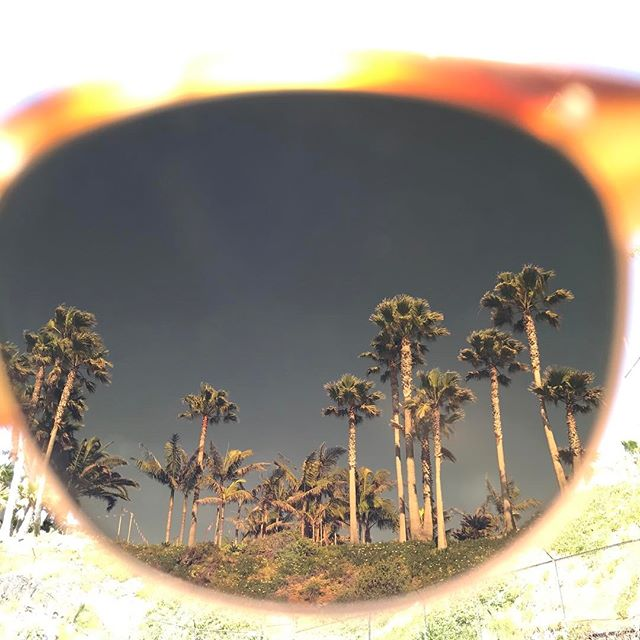 Laguna palms through the Alue One in Watermark Chestnut 🌴#wearalue