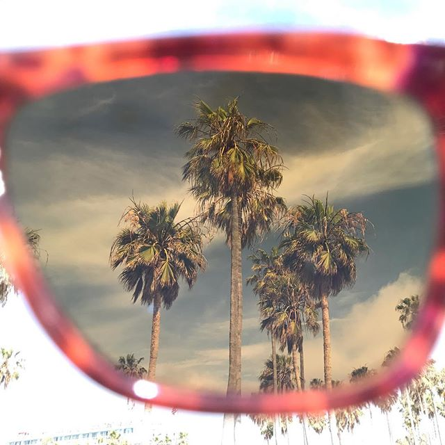Boardwalk palms through the Alue Ten in Robin Tortoise 🏖 #wearalue