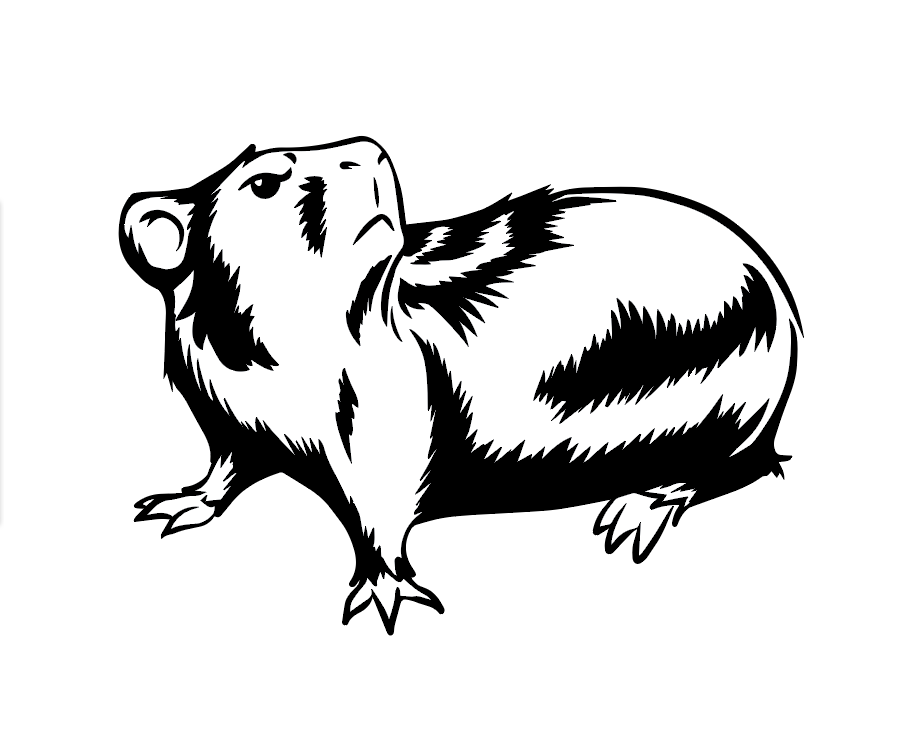 Guinea Pig Illustration