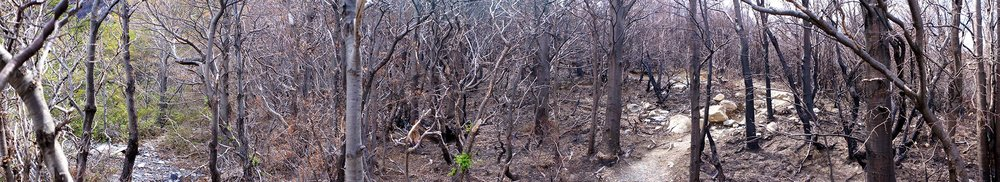torres_del_paine_w_trek_burned_trees.jpg