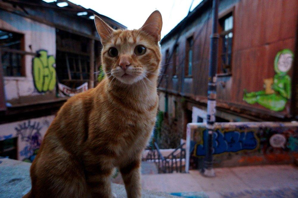 valparaiso_cat.jpg