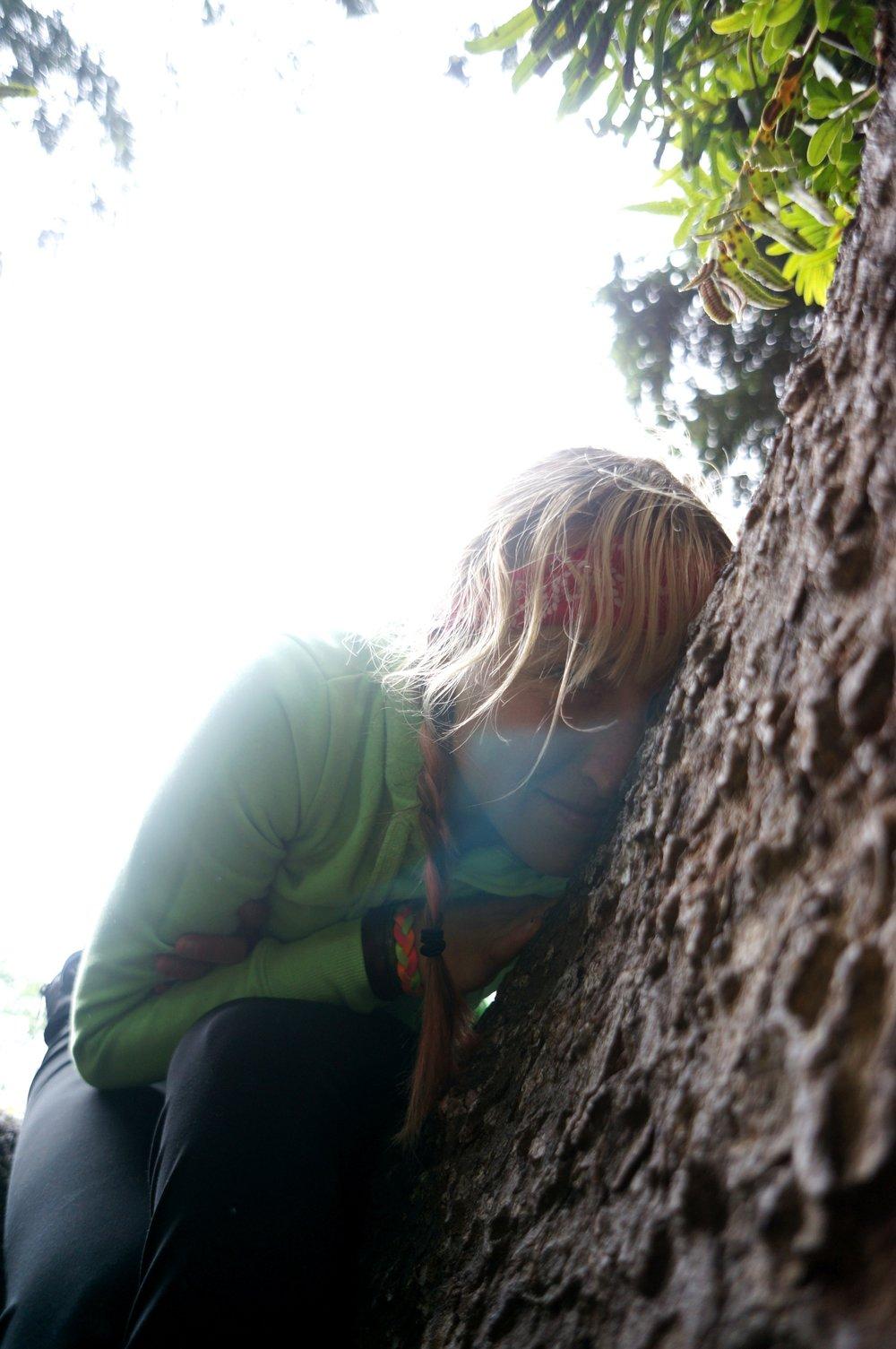 oregon_fern_canyon_candice_tree.jpg