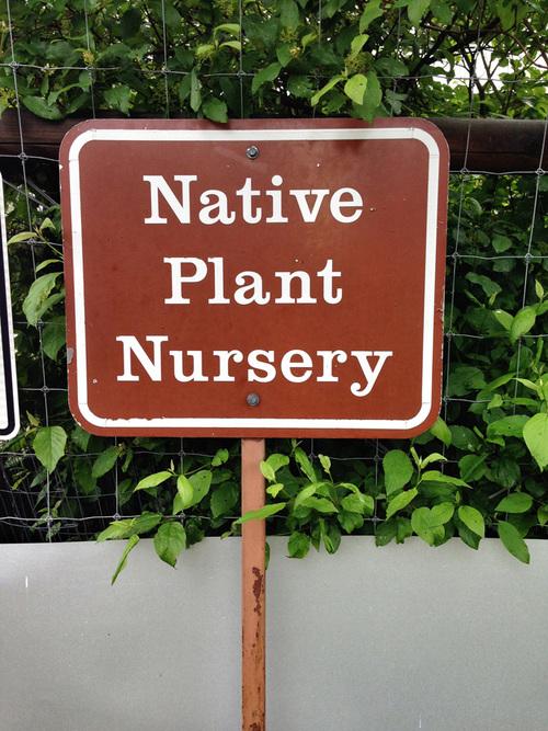 Native Plant Nursery - GNP