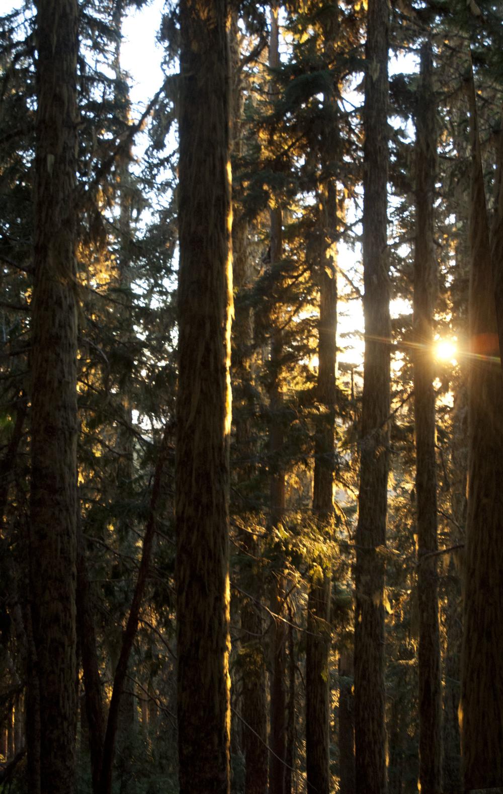 2woods.jpg