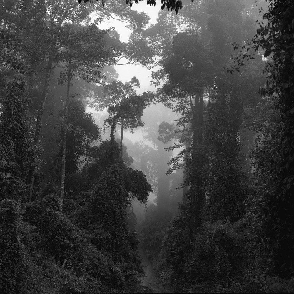 Danum Valley (2007) . Marie Espeus