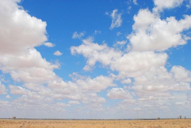 Dry field landscape