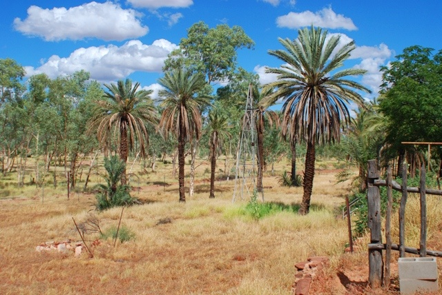 Hermannsburg palms