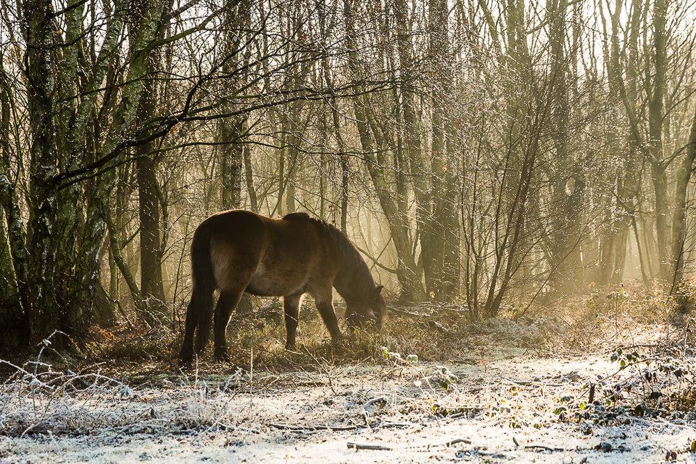 Ponies-5.JPG
