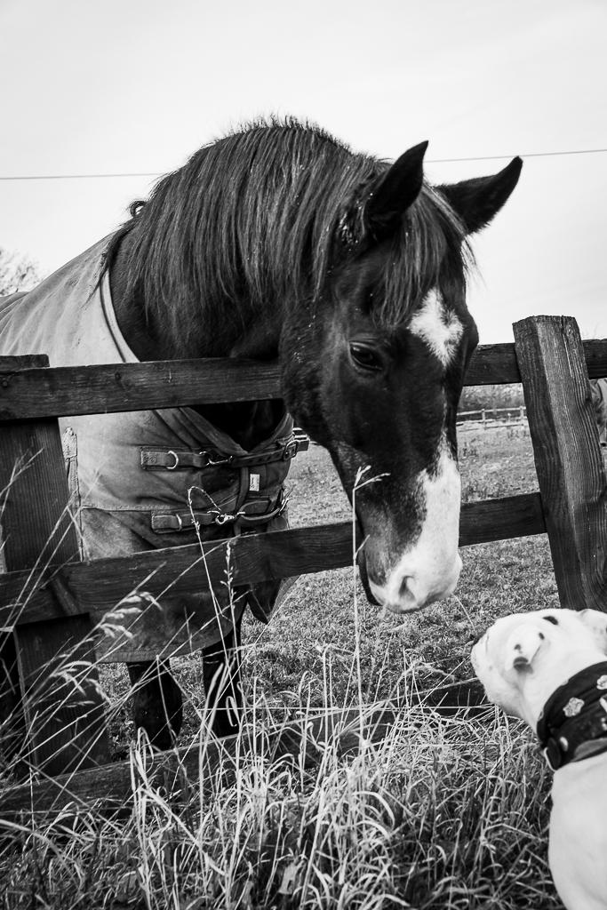 Meet The Horses-1.JPG
