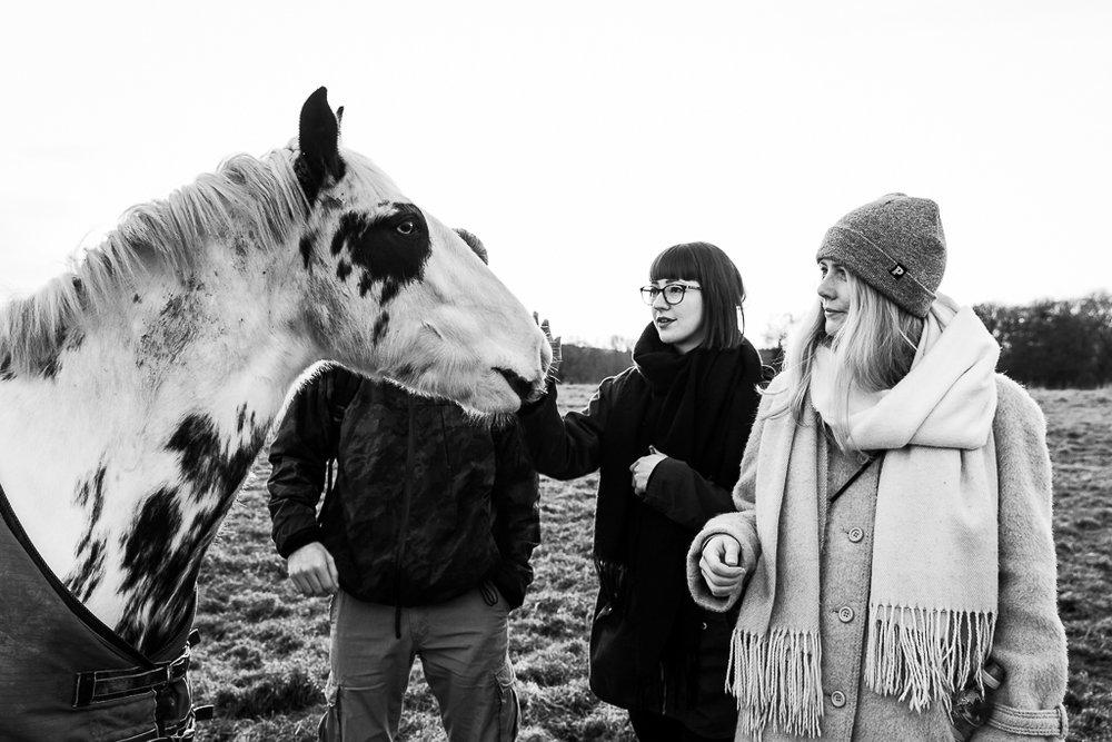 Meet The Horses-3.JPG