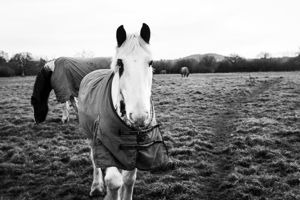 Meet The Horses-2.JPG